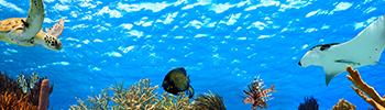 Sea_Turtle_350x100