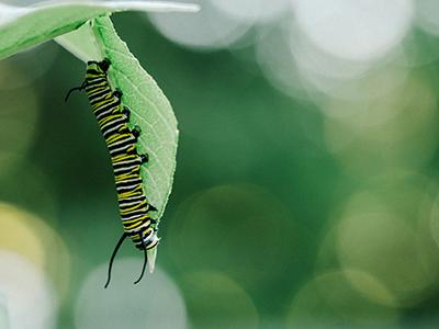 Caterpillar_400x300