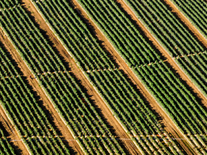 Agriculture_2_ASA Blog Post Images_400x300