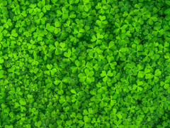 St. Patrick's Day: The Statistics Legacy Behind Guinness